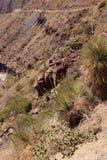 Century plant (Agave americana) Stock Image