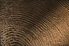 Century rings of a tree. Tree, rings, century, century,  cut, structure, background, structure, wood, circles Royalty Free Stock Images
