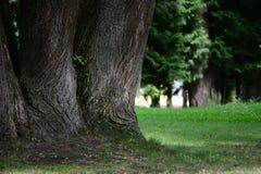Century trees landscape Stock Photos