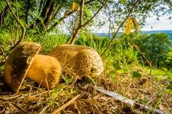 CEP в траве на пределе леса и луга Стоковые Фото