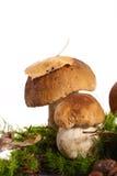CEP леса Стоковая Фотография