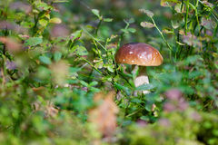 Cep Royalty Free Stock Photography