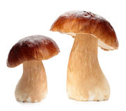 Cep. On a white background Stock Photos
