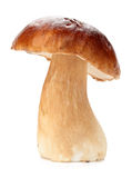 Cep Stock Photo