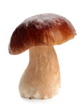 Cep Royalty Free Stock Image