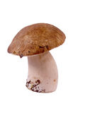 Cep Royalty Free Stock Photo