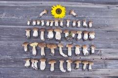 Cep boletus fungi harvest on wooden background Royalty Free Stock Images