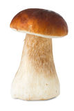 Cep, boletus, isolated Stock Image