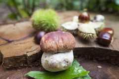 Cep and chestnuts on fresh stump Royalty Free Stock Photos
