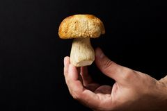 Cep in the hand Stock Photos