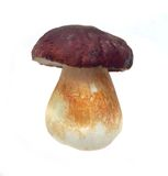 Cep isolated Stock Image