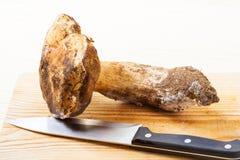 Cep mushroom Royalty Free Stock Photo