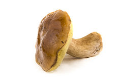 Cep, mushroom, fresh Stock Photography