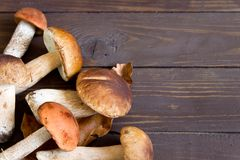 Cep mushrooms. Boletus oak leaves and acorns on the wooden surfa. Ce. Autumn template Royalty Free Stock Photo