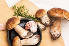 Cep mushrooms with garlic. Top view on heap of cep mushrooms with thyme and garlic served on wooden cutting board Stock Image