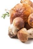 Cep mushrooms Royalty Free Stock Photos