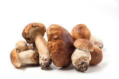 Cep mushrooms Royalty Free Stock Photo