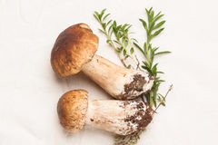 Cep mushrooms. Heap of cep mushrooms with thyme over white cotton textile Stock Photography