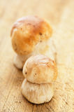 Cep mushrooms on kitchen wooden board Stock Image