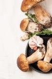 Cep mushrooms Royalty Free Stock Photo