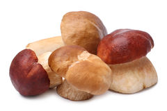 Cep mushrooms (Boletus edulis) Royalty Free Stock Image