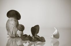 Cep porcini boletus twins with artistic touch in black and white backdrop with copy spac Royalty Free Stock Image