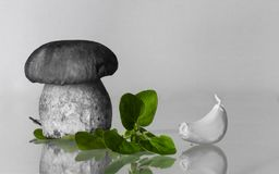 Free Cep Porcini Boletus Twins With Oregano And Garlic Artistic Touch Backdrop With Copy Space Royalty Free Stock Photography - 100270107