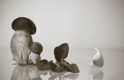 Cep porcini borowika bliźniacy z artystycznym dotykiem w czarny i biały tle z odbitkowym spac Obraz Royalty Free