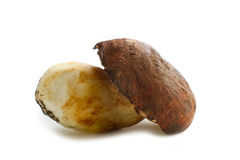Cep on white Royalty Free Stock Photos