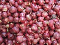Cepa d'allium d'oignon rouge Images libres de droits
