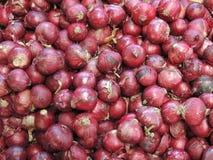 Cepa d'allium d'oignon rouge Image stock