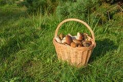 Cepes в корзине, гриб леса Стоковое фото RF