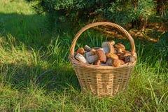 Cepes в корзине, гриб леса Стоковые Изображения