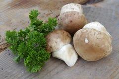2 cepes грибов Стоковые Изображения RF