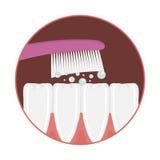 Cepillado de diente del vector Imagen de archivo libre de regalías