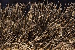 Cepillo de alambre Imagen de archivo