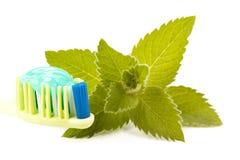 Cepillo de dientes, crema dental y hojas frescas de la menta Fotos de archivo libres de regalías