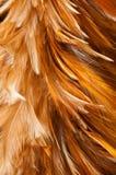 Cepillo de la pluma Fotografía de archivo libre de regalías
