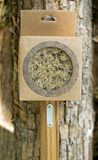 Cepillo de madera con una manija Imágenes de archivo libres de regalías