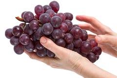 Cepillo de uvas rojas en la mano imagen de archivo