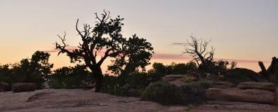 Cepillo del horizonte del desierto Fotos de archivo libres de regalías