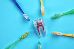 Cepillos de dientes y maqueta plástica del diente Imágenes de archivo libres de regalías