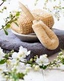 Cepillos de la lufa y del cuerpo para el tratamiento de la belleza y de la peladura Fotos de archivo