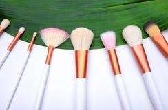 Cepillos del maquillaje en la hoja verde Imagenes de archivo