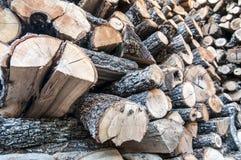 Ceppi accatastati del pino Fotografia Stock