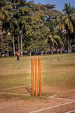 Ceppi del cricket immagini stock