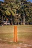 Ceppi del cricket fotografie stock libere da diritti