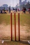 Ceppi del cricket fotografia stock