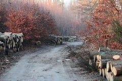 Ceppi del legname Fotografie Stock Libere da Diritti