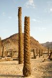 Ceppi della palma Fotografie Stock